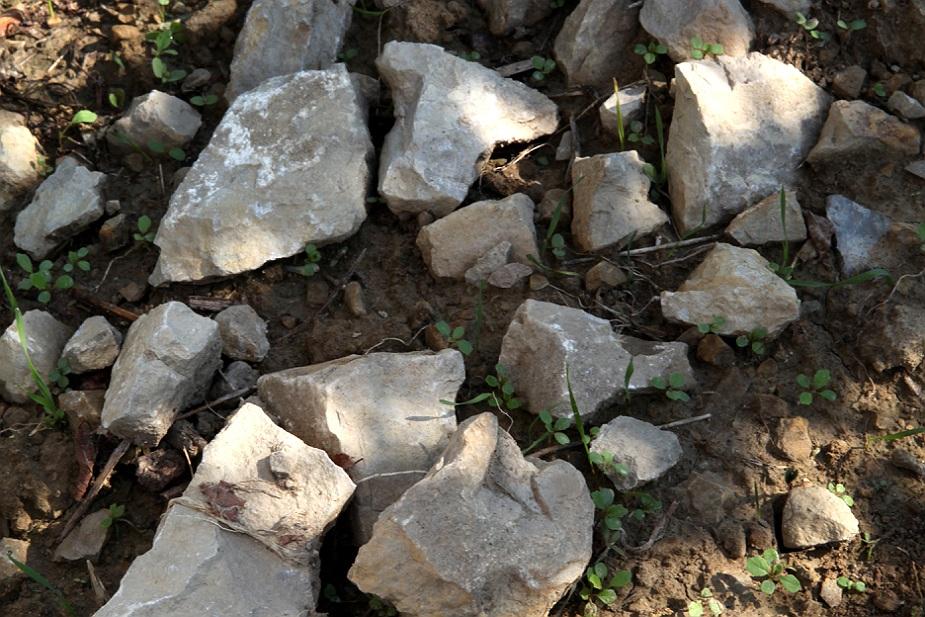 Limestone marl Chateau de Lancyre AOC Coteaux du Languedoc Pic Saint Loup