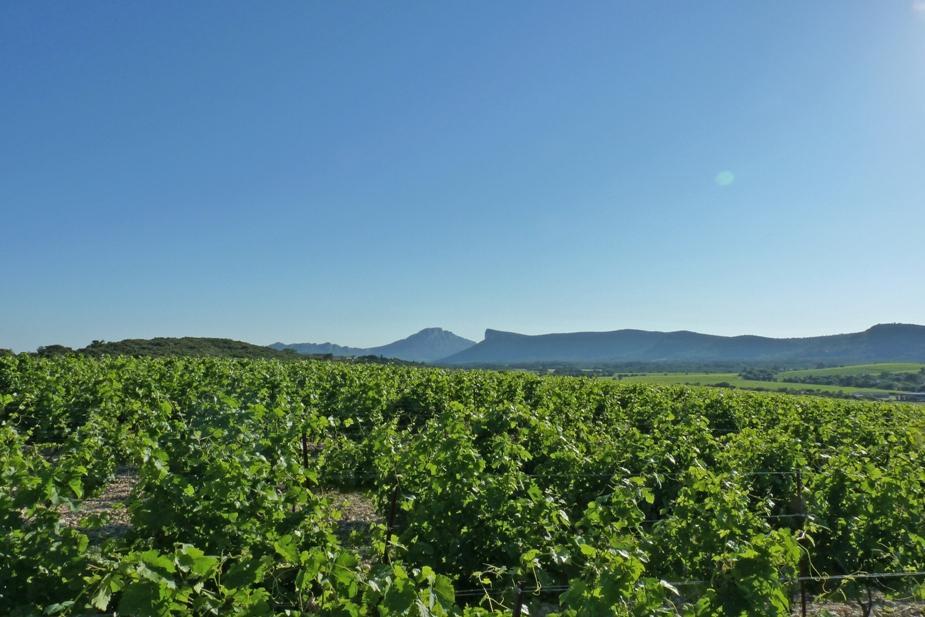 La charbonniere Chateau de Lancyre AOC Coteaux du Languedoc Pic Saint Loup