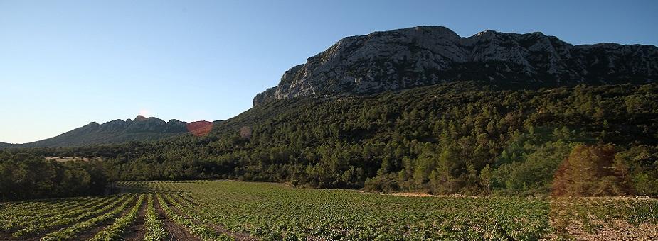Combe de Fambetou Lancyre vin Pic Saint Loup