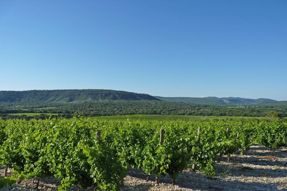 ultime Chateau de Lancyre AOC Coteaux du Languedoc Pic Saint Loup