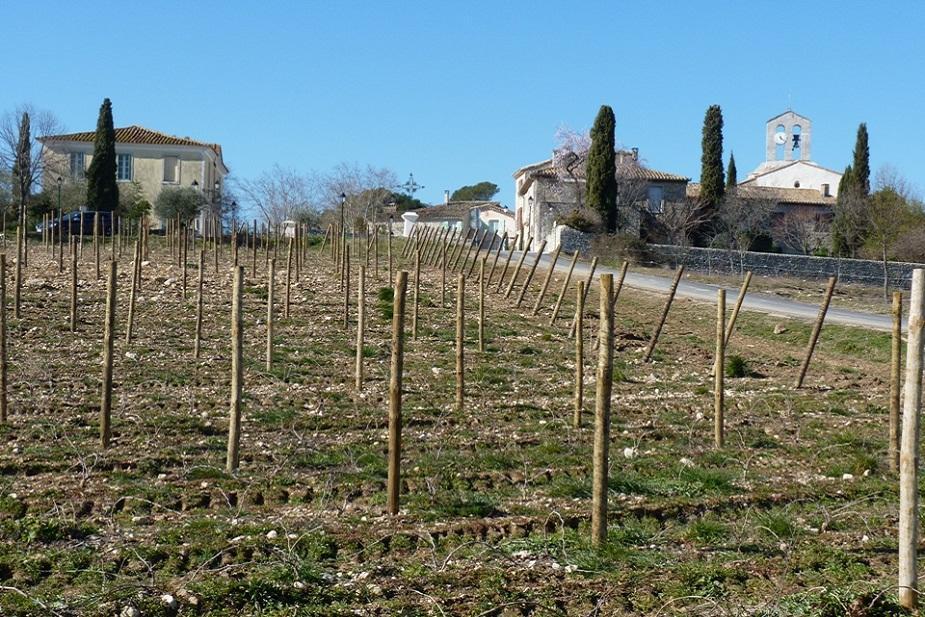 Syrah de La Croix Chateau de Lancyre AOC Coteaux du Languedoc Pic Saint Loup
