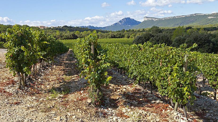 Un terroir d exception : le pic saint loup et un domaine d expection : Le Chateau de Lancyre AOC Coteaux du Languedoc Pic Saint Loup