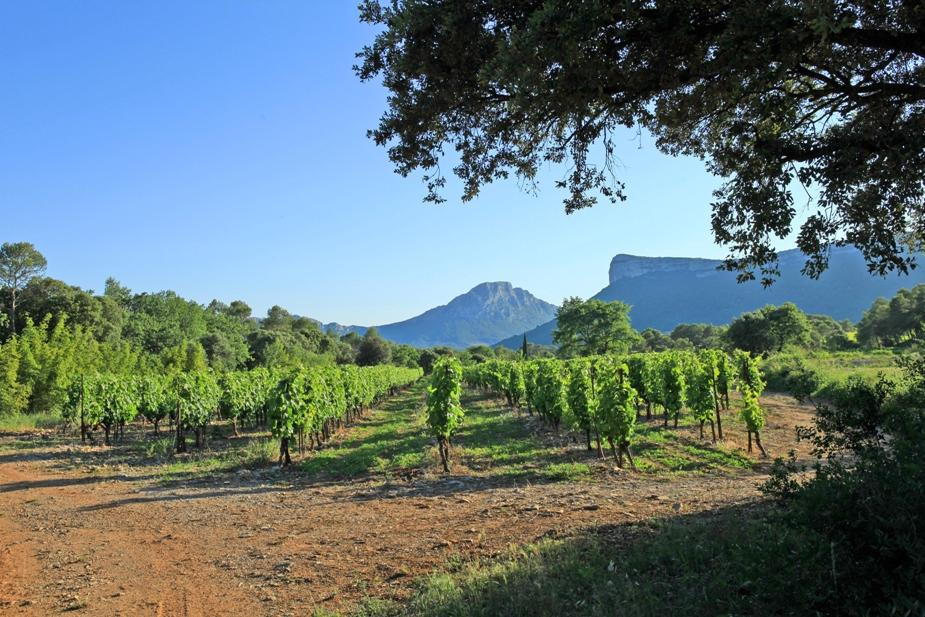 Syrah de la Vernede Chateau de Lancyre AOC Coteaux du Languedoc Pic Saint Loup