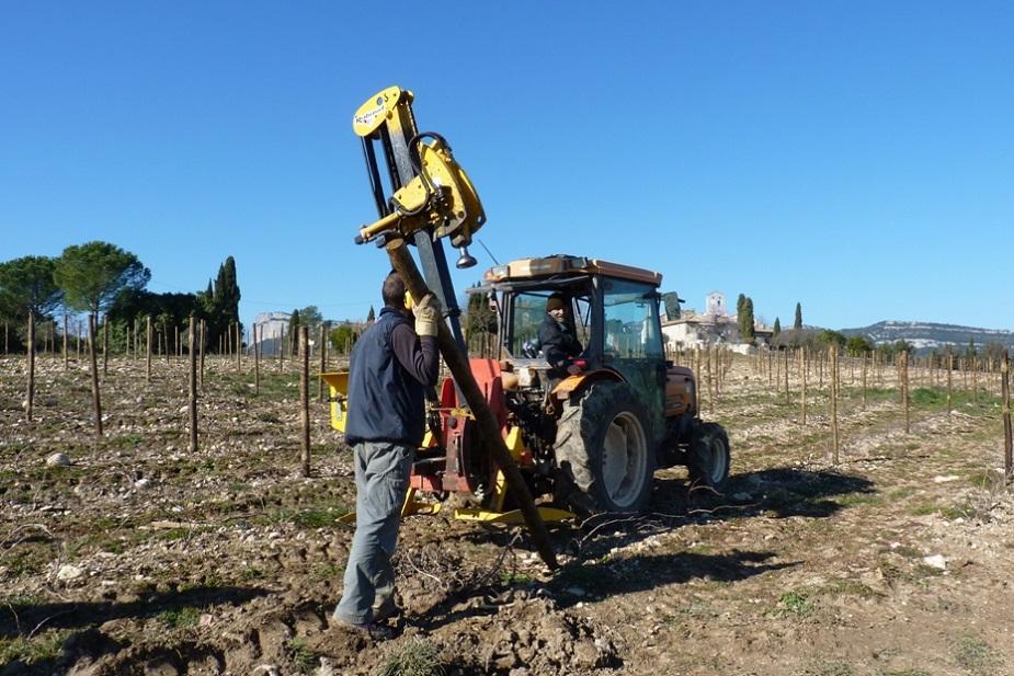 Plantation de piquets bois sur jeune vigne de syrah Chateau de Lancyre AOC Coteaux du Languedoc Pic Saint Loup