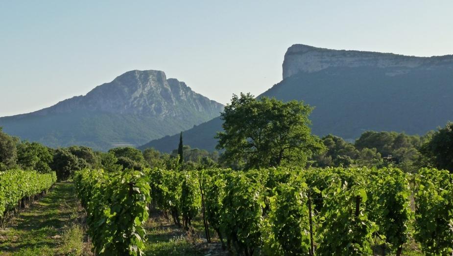 Vernede parcelle de Syrah Chateau de Lancyre AOC Coteaux du Languedoc Pic Saint Loup